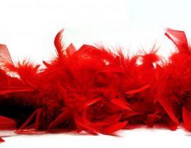 feather-boa-786906-m