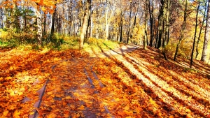 autumn-in-moscow-1433556-2-m